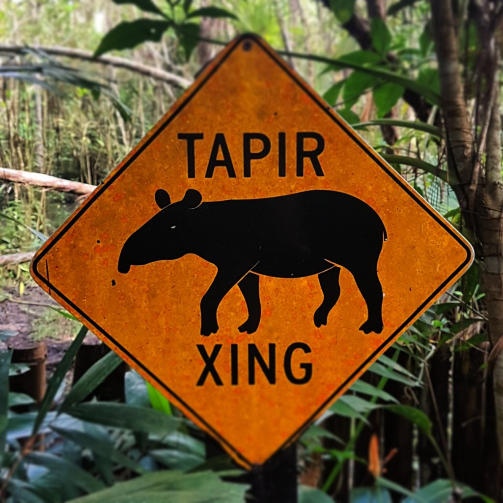 Belize tábla tapír