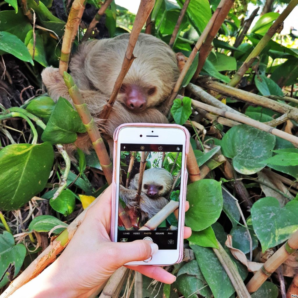 costa rica lajhár gyerekkel telefonon kép a képben
